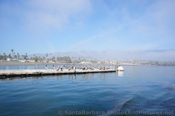 Herons on a Pier in Santa Barbara with beach in the distance.jpg